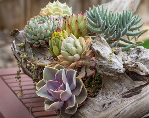8 Creative Ways to Plant Succulents - San Diego Home/Garden Lifestyles
