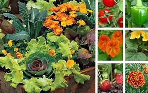 Quel Legume Planter En Septembre : mini potager archives my little jardin my little jardin ~ Melissatoandfro.com Idées de Décoration