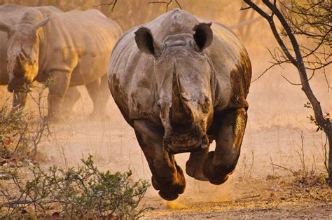 Animals Wallpapers For Mobile - rhino nature animals wallpapers hd desktop and mobile