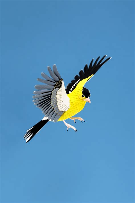 american bird series a4 print new limited edition