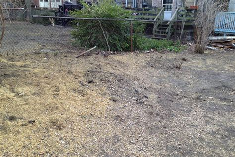 Removing Trees From Backyard by Backyard Tree Removal Before And After Photos Avoision