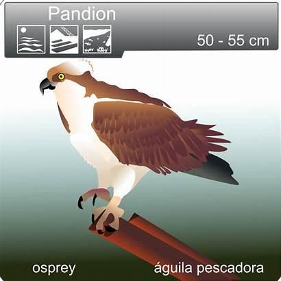 Osprey Clip Onlinelabels
