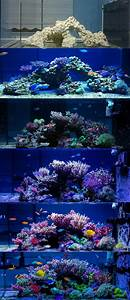 Aquarium L Form : 985 best aquarium images on pinterest aquariums fish ~ Sanjose-hotels-ca.com Haus und Dekorationen