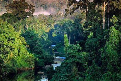 amazing photography tropical rainforest