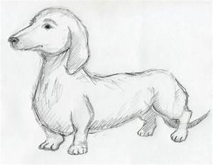 Dog Sketches For Inspiration
