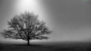 Black And White Images Of Trees 25 Desktop Wallpaper ...