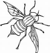 Fly Coloring Pages Printable Animals Fireflies Sheet Animal Print sketch template