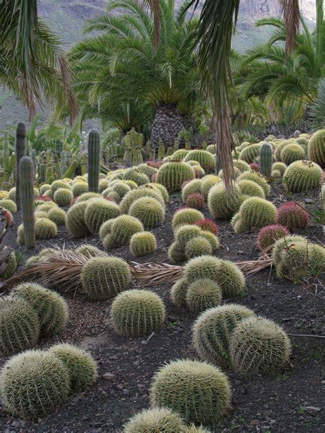 cactus garden cactus garden wikipedia