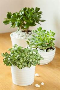 Tall, Indoor, Plants, That, Are, Beautiful, And, Easy, To, Maintain