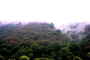 central american pine oak forests wikipedia