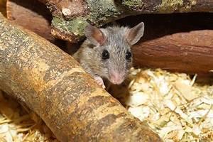 Produit Pour Tuer Les Rats : super pi ge souris sans danger pour vos animaux domestiques et sans tuer les souris pi ge ~ Voncanada.com Idées de Décoration