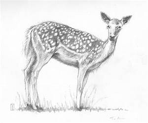 sketches deer - Google Search | Sketchs | Pinterest | Sketches