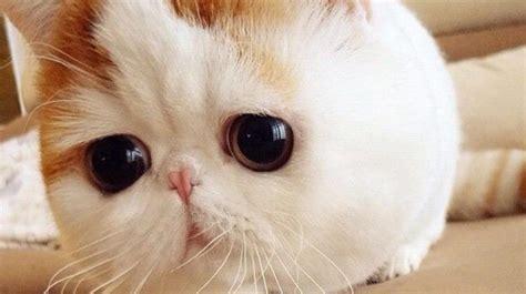 internacional del gato las imagenes mas tiernas
