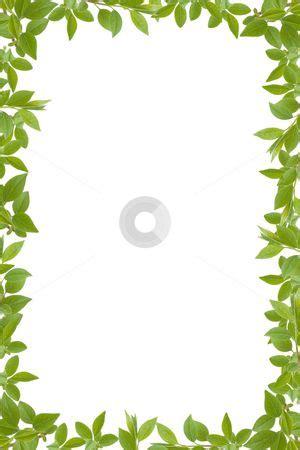 leaf border images google search leaf border petals