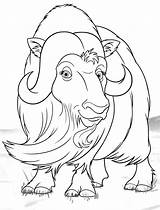 Ox Musk Template Coloring Shaggy Templates sketch template
