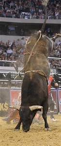 1000+ ideas about Bull Riders on Pinterest | Bull Riding ...