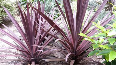 plantes exterieur toutes saisons 18 gartenstr 228 ucher mit roten bl 228 ttern f 252 r sch 246 ne gartengestaltung