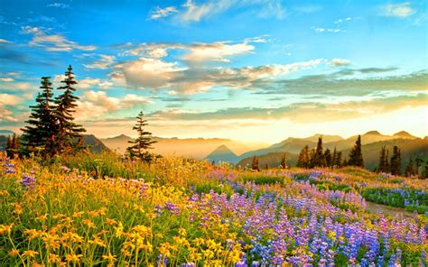 sunset mountain wilderness france spring mountain flowers