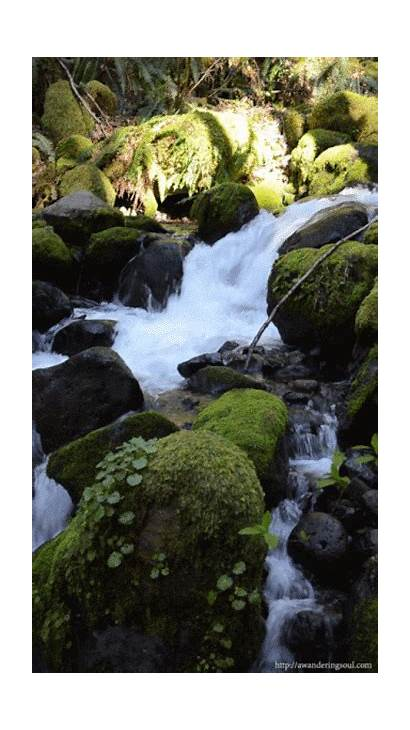 Nature Surprises Something Ramana Maharshi Dry Creek