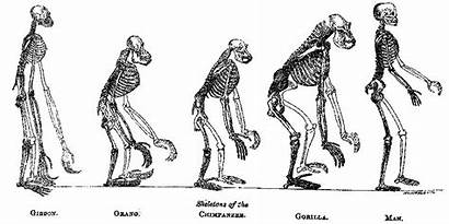 Human Nature Origins Evolution Fossils Biology Place