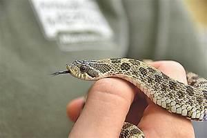 Große Reptilien Für Zuhause : moosach anwohner findet tier neben einem ~ Lizthompson.info Haus und Dekorationen