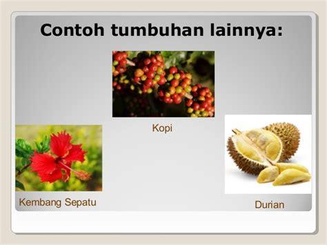 presentasi vegetatif buatan