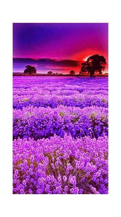 Flores Coreano Aprende Nature Wattpad Paesaggi Verticali