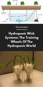 Hydroponic Wick Systems  The Training Wheels Of The
