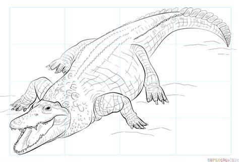 draw  nile crocodile step  step drawing tutorials