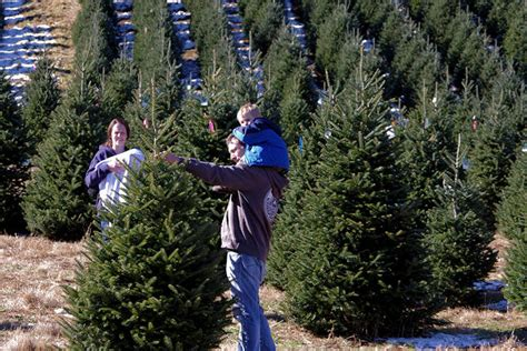 holiday tree farm tree farms near asheville