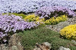 Die Schönsten Steingärten : bodendecker f r den steingarten diese bieten sich an ~ Bigdaddyawards.com Haus und Dekorationen