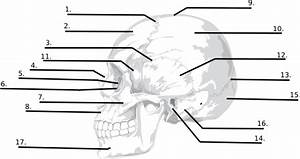 Of Skull Blank Diagram