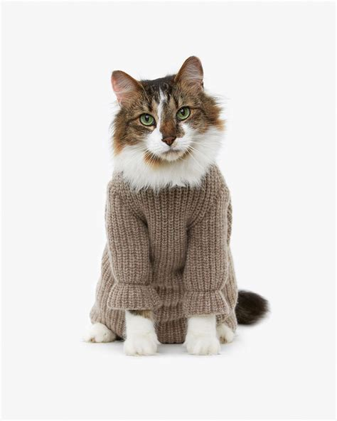 cat sweaters for cats sweater weather