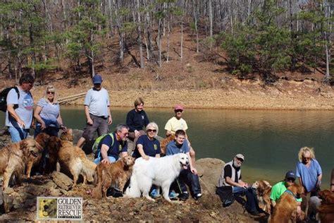 Golden Retriever Rescue Of Atlanta Home Facebook