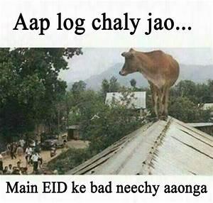 Eid ul azha funny pictures