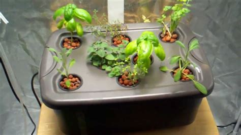 hydroponic herb garden build a hydroponic herb garden for cheap by epic