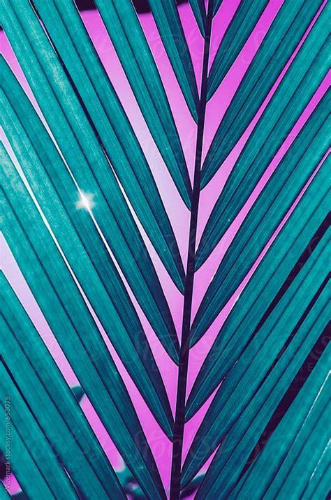Pin by Wizemark on MyFarmasi in 2020 Palm leaves pattern