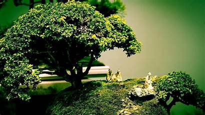 Bonsai Tree Wallpapers Background Trees Nature