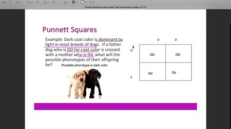 Punnett Squares And Sex Linked Traits Presentation Youtube
