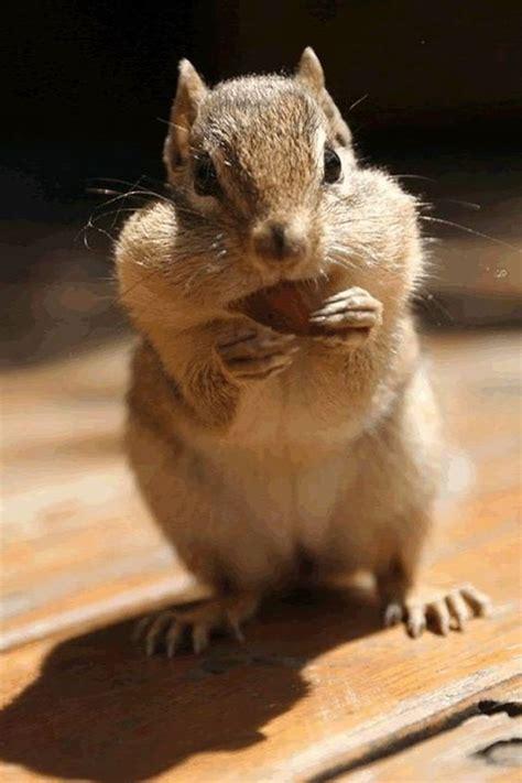 Cute Animal Iphone Wallpapers 640x960 (22)jpg (640×960