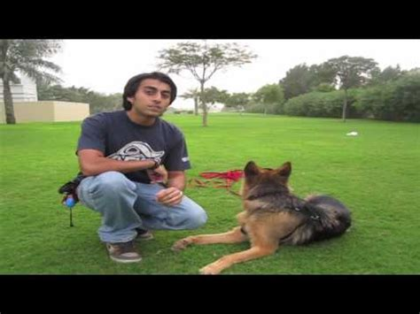 Dog Training Come When Called
