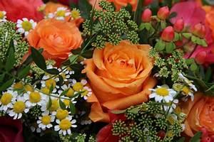 Bilder Blumen Kostenlos Downloaden : blumenstrau bilddatenbank bilder kostenlos und lizenzfreie fotos slideshow und ~ Frokenaadalensverden.com Haus und Dekorationen