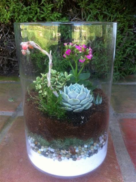succulent plant diy terrarium kit by succulentoasis on