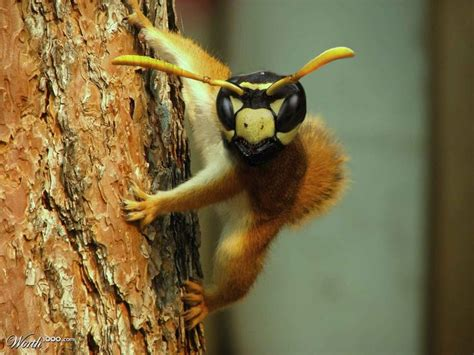 bee a squirrel worth1000 contests 2 magic aliens monsters and creatures