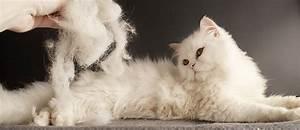 Katzenhaare Entfernen Kleidung : katzenhaare entfernen alle tipps hausmittel tierisch wohnen ~ Orissabook.com Haus und Dekorationen