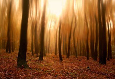 blurry forest photography abstract background