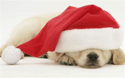 Christmas Dog Wallpapers Definition