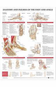Anatomical Chart Company Athletic Injuries Of The Knee
