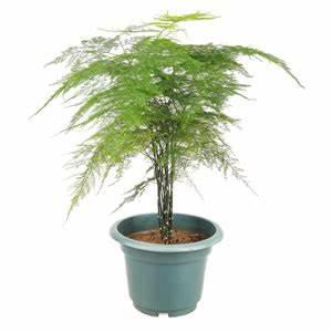 Pflanzen Für Trockene Schattige Standorte : zimmerpflanzen f r dunkle standorte und k hle r ume ~ Michelbontemps.com Haus und Dekorationen