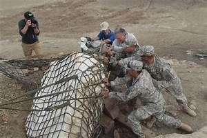 DVIDS - News - New Mexico National Guard airlifts dinosaur ...